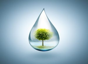 Water Quality and Environment